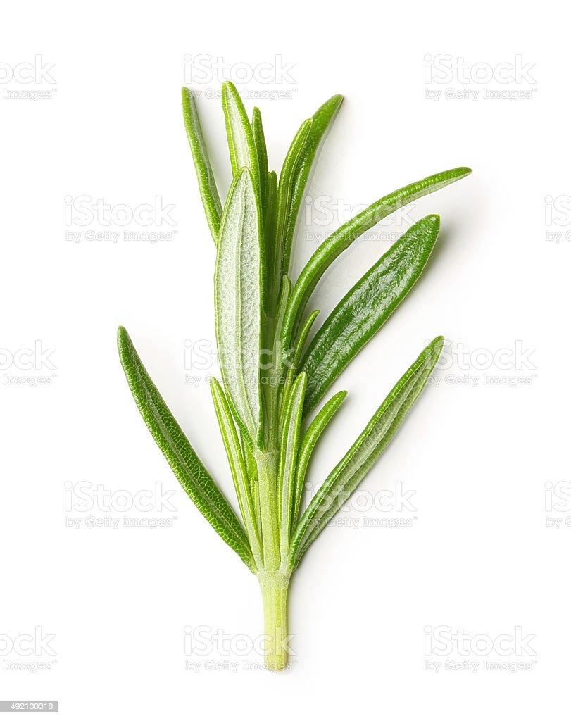Rosemary twig isolated stock photo