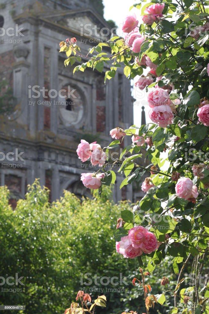 Roses et Abbaye - Photo