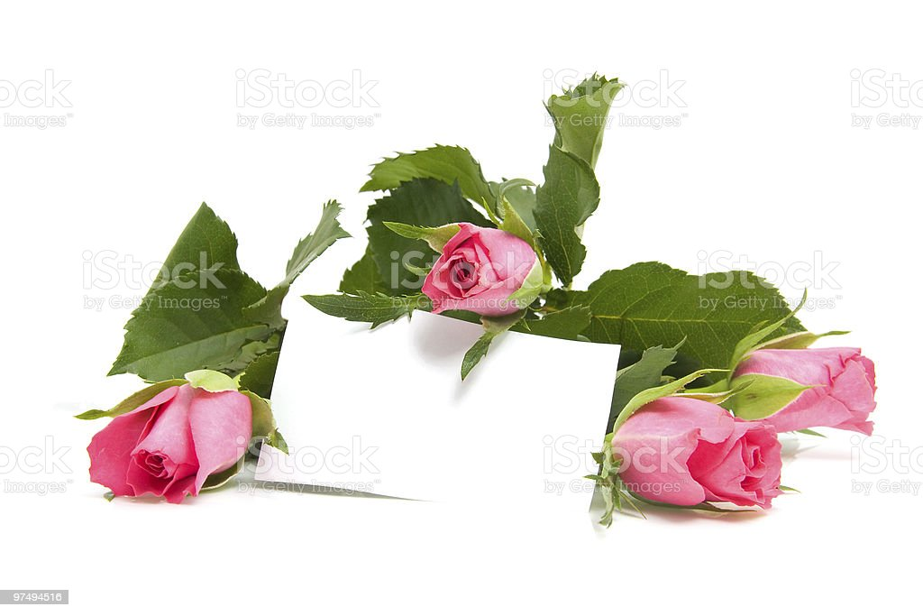 roses and empty card royalty-free stock photo