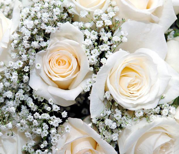 Roses and gypsophila picture id115963657?b=1&k=6&m=115963657&s=612x612&w=0&h=sf1j6xpycmbabtratqvxjpnvdlnsdpfekf50fijoyi8=