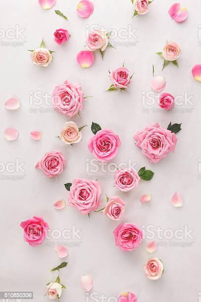 Roses and petals background picture id510850306?b=1&k=6&m=510850306&s=612x612&h=6l3wchfew0kjixuwmkwdu6exipnprlluis dixma9mg=