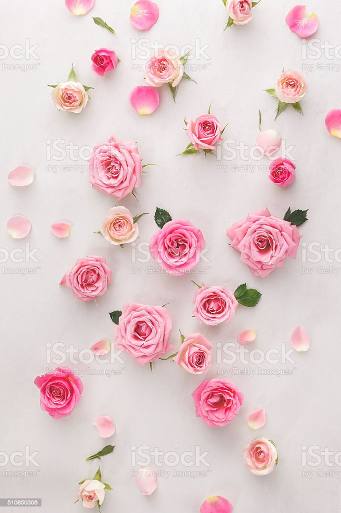 Roses and petals background stock photo