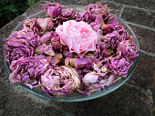 roses and petals, bouquet of pink and purple flowers, decoration romance, old english roses, romantic feeling