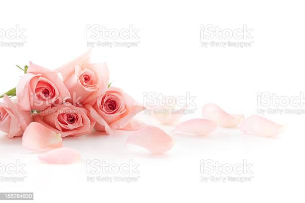 Roses and petals picture id155284830?b=1&k=6&m=155284830&s=612x612&h=jzmztecxib5xms ysndrhhqzj plhipnpax bstyksy=