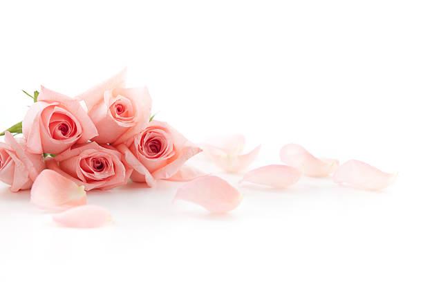 roses and petals - rose petals stock pictures, royalty-free photos & images