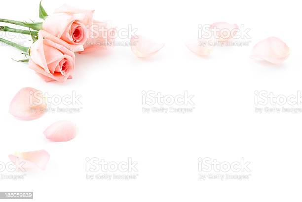 Roses and petals picture id185059639?b=1&k=6&m=185059639&s=612x612&h= 4ierya1nj1wmubdpk0yofon ytnygmry8tik1llt8o=