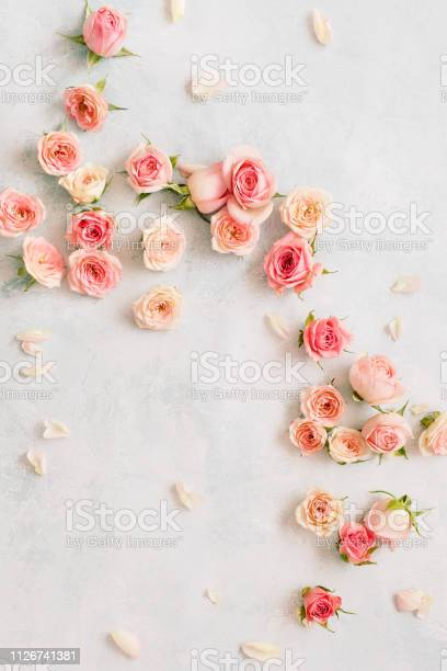 Roses and petals scattered on textured background overhead view picture id1126741381?b=1&k=6&m=1126741381&s=612x612&h=fy3gwp3dbh1blqb7s5ts3z8cq5vsh2ooghqmin203oo=