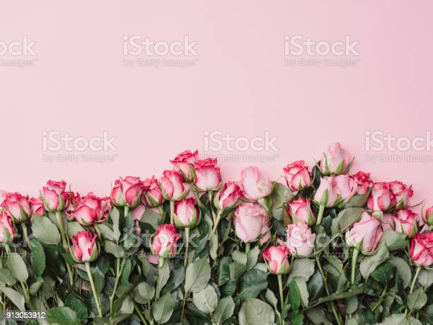 Roses background of pink roses ready borders for valentine picture id913053912?b=1&k=6&m=913053912&s=612x612&h=dm3t8oh9b693sdxflfrmjmxkq5qfhsq01sptyglb6jm=