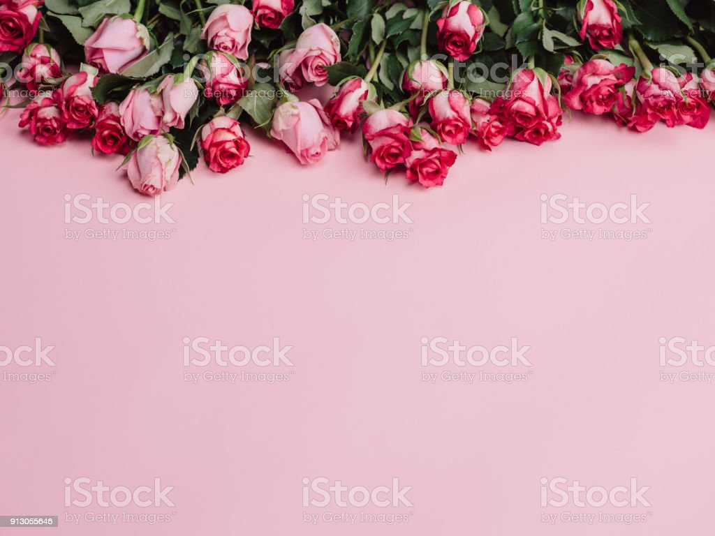 Roses background of pink roses ready borders for valentine royalty-free stock photo