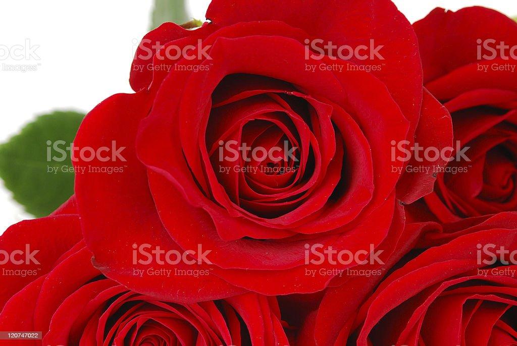 Roses background. royalty-free stock photo