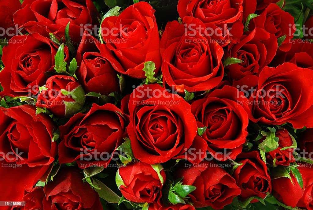 Roses background stock photo