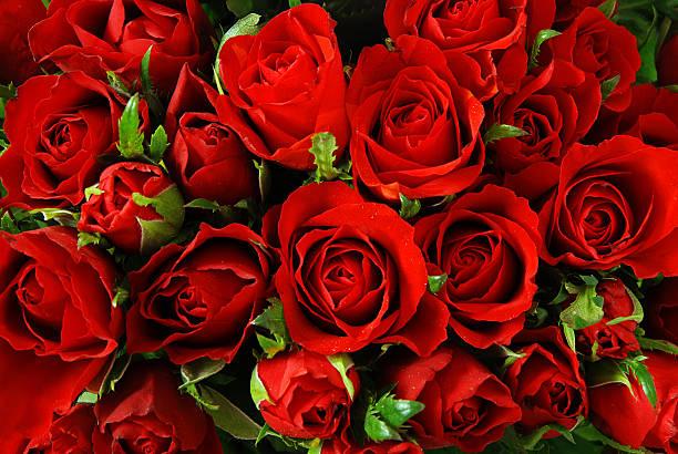 roses background - meerdere lagen effect stockfoto's en -beelden