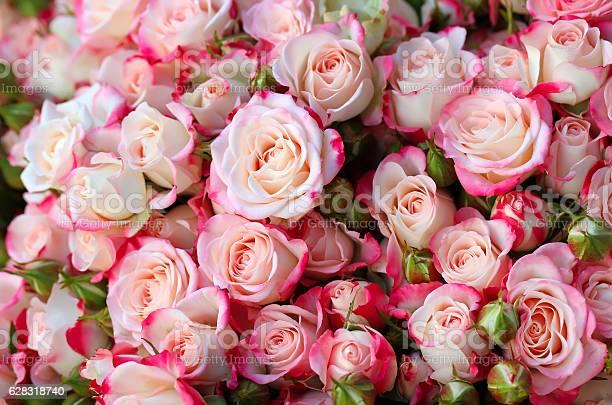 Roses background picture id628318740?b=1&k=6&m=628318740&s=612x612&h=ntgsvjvfu7ezap3kjckdr1 rkz9jd7n5fvgj w9peke=