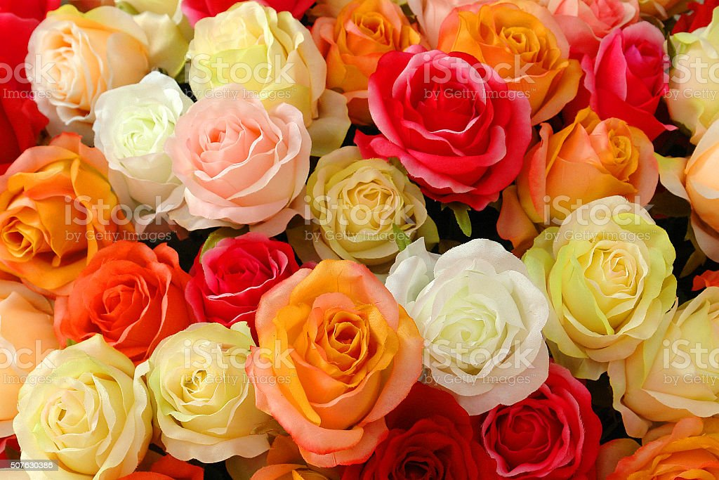 Roses, backgrounds, love. stock photo
