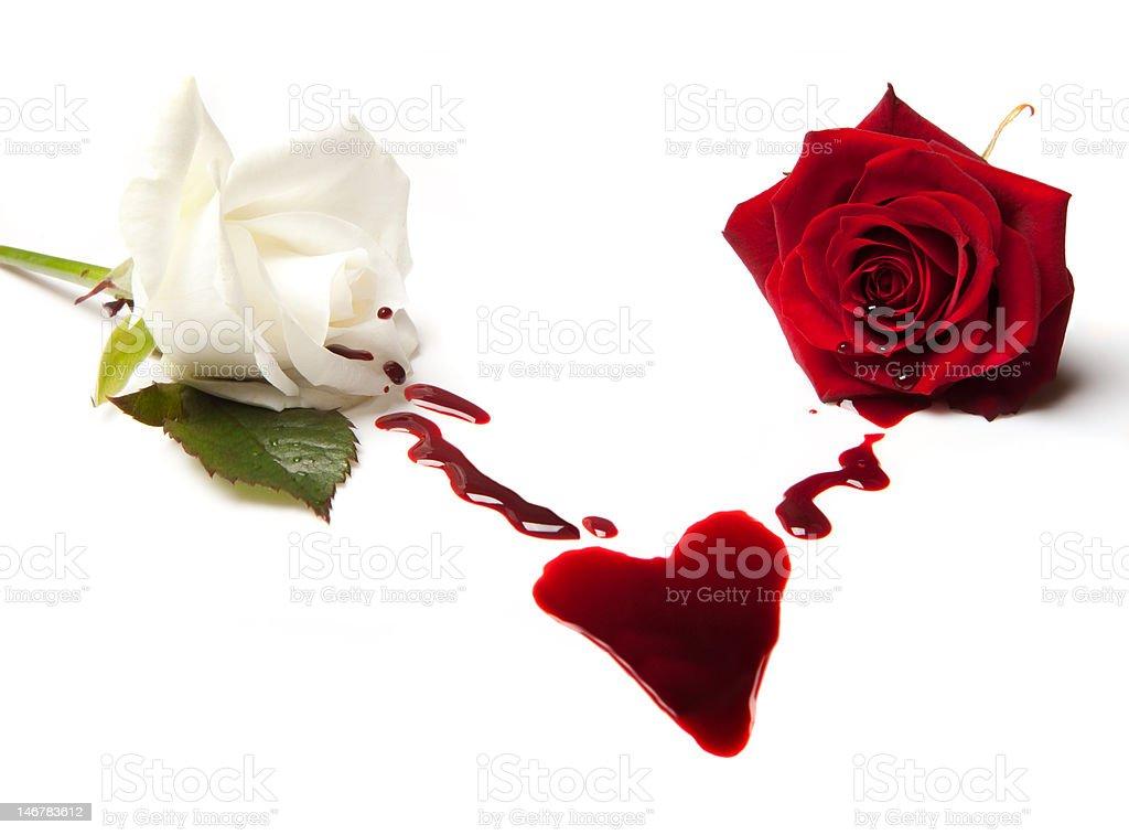 Roses bleeding a heart stock photo