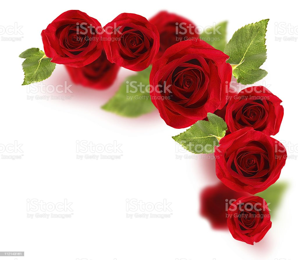 Roses border royalty-free stock photo