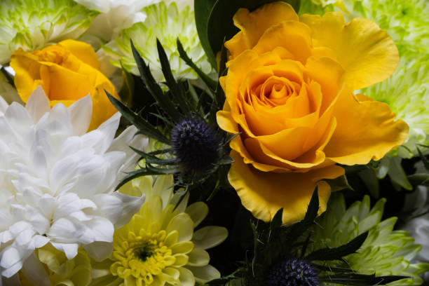 Roses bouquet with other fauna stock photo