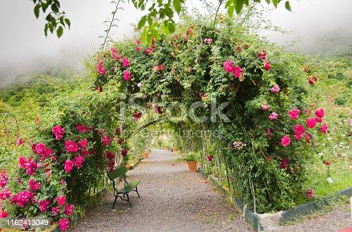 Rote Rosen ranken auf einem Bogen in einem Park