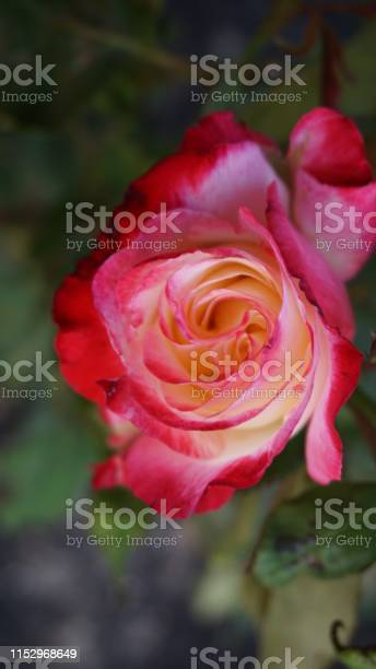 Roses by and other name would smell as sweet