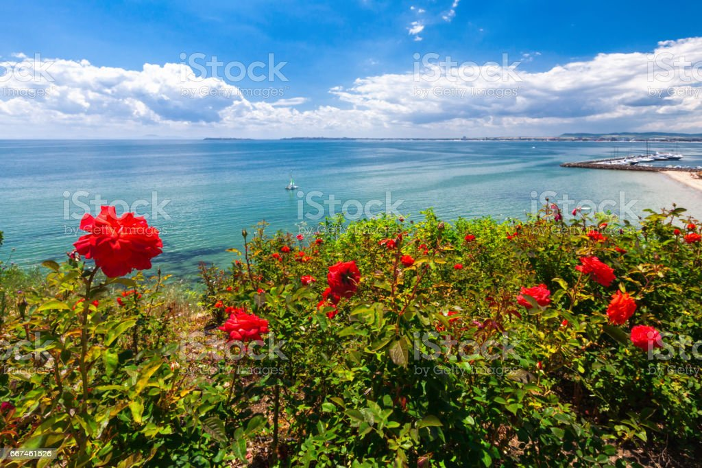 Roses by the asure sea stock photo
