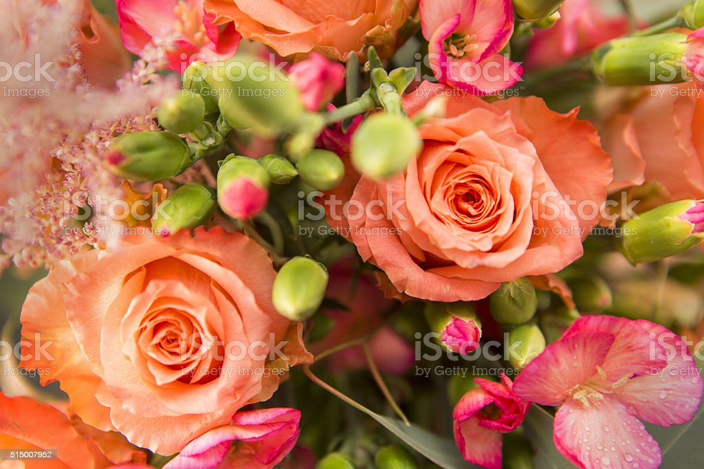 Roses Close up stock photo
