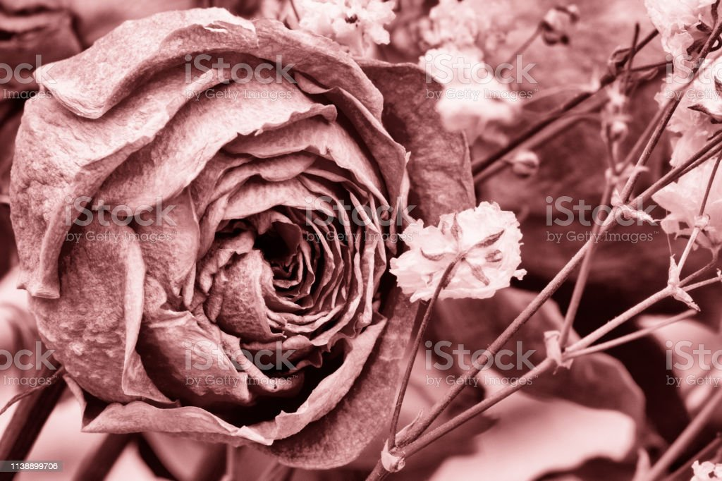 Roses dried flowers Interior decoration Limited depth of field Tinted...