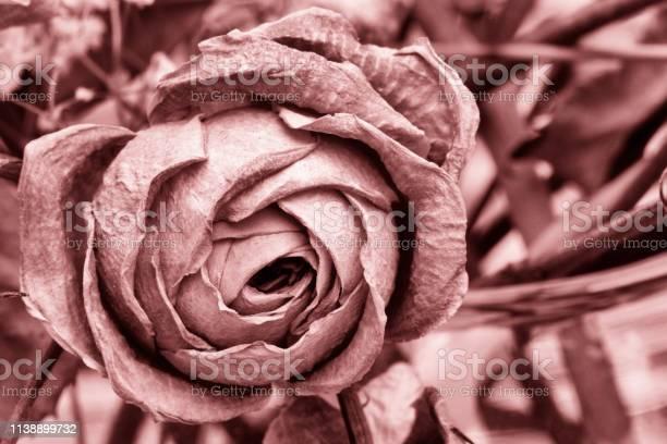 Roses dried flowers interior decoration limited depth of field tinted picture id1138899732?b=1&k=6&m=1138899732&s=612x612&h=n0dnit7od4dqualxjmgkgw5k871chwxytclfcqqsqks=