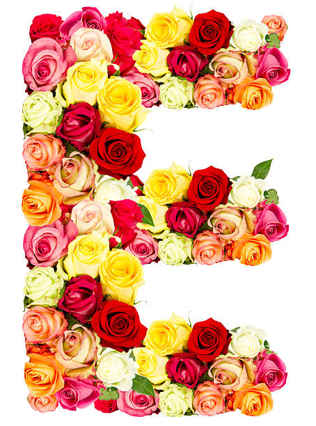 E, roses flower alphabet stock photo