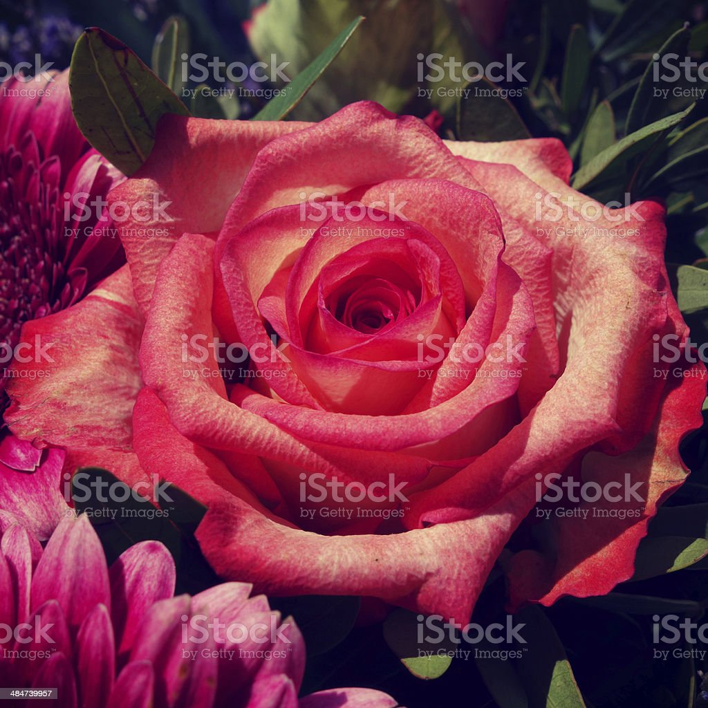 Roses for Mother's Day stock photo