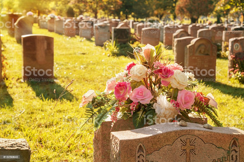 Roses in a cemetery with headstones stock photo