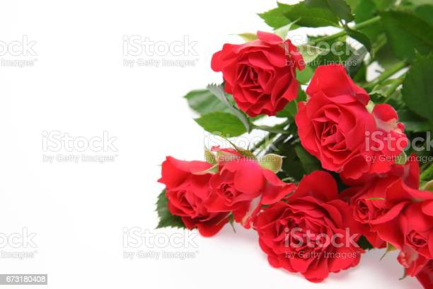 Roses in a white background picture id673180408?b=1&k=6&m=673180408&s=612x612&h=axvwqy kilrcuvkxqq1epifni8om3zueleepaxm0qu4=