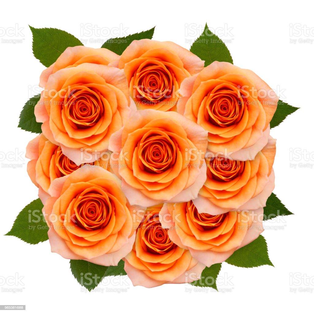 장미 20송이 흰색 배경 - 로열티 프리 0명 스톡 사진