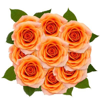 장미 20송이 흰색 배경 0명에 대한 스톡 사진 및 기타 이미지