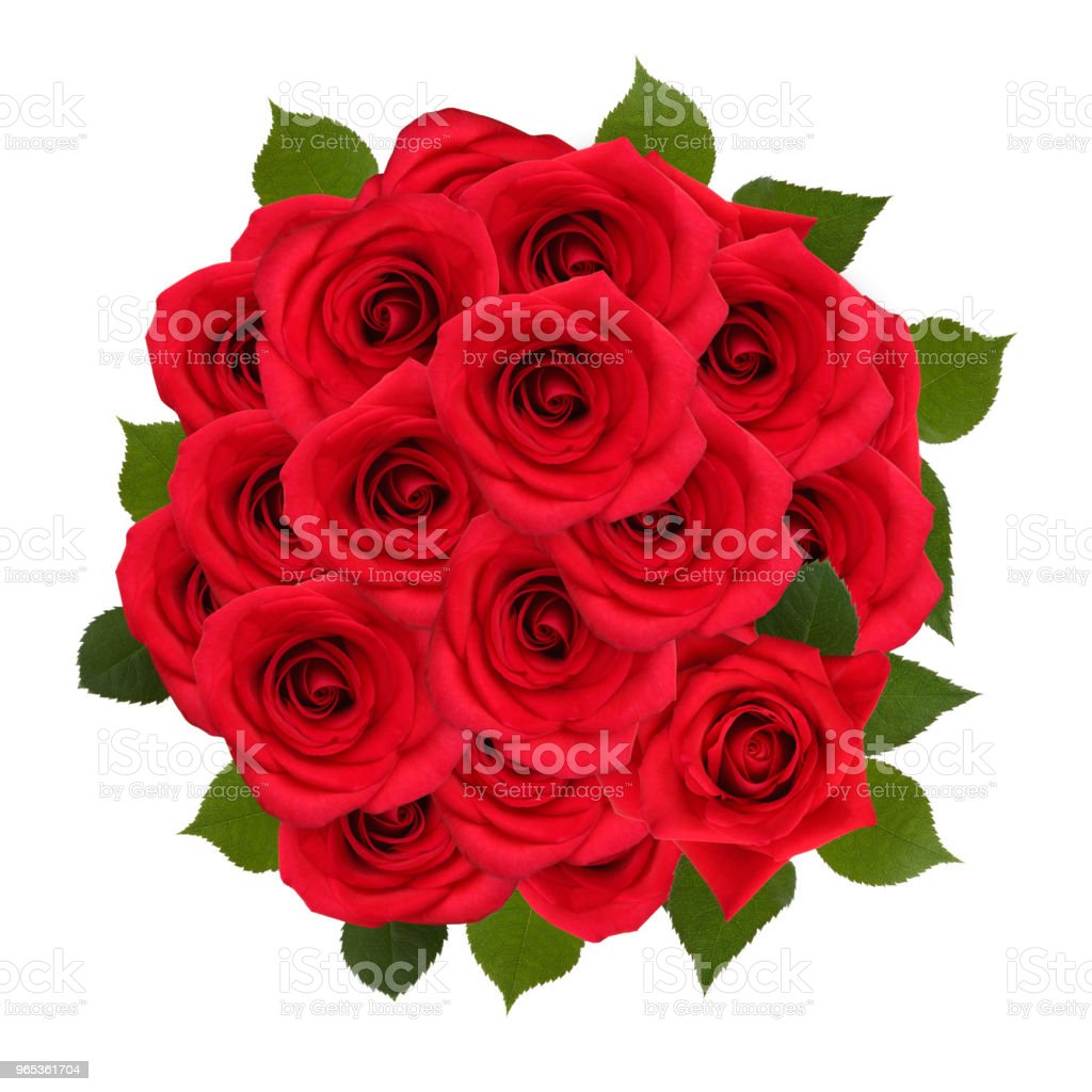 Roses in a white background royalty-free stock photo
