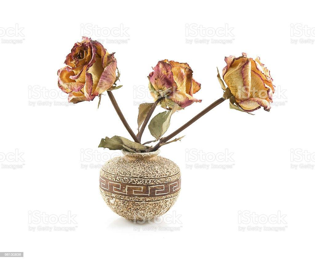 roses in ceramic vase royalty-free stock photo