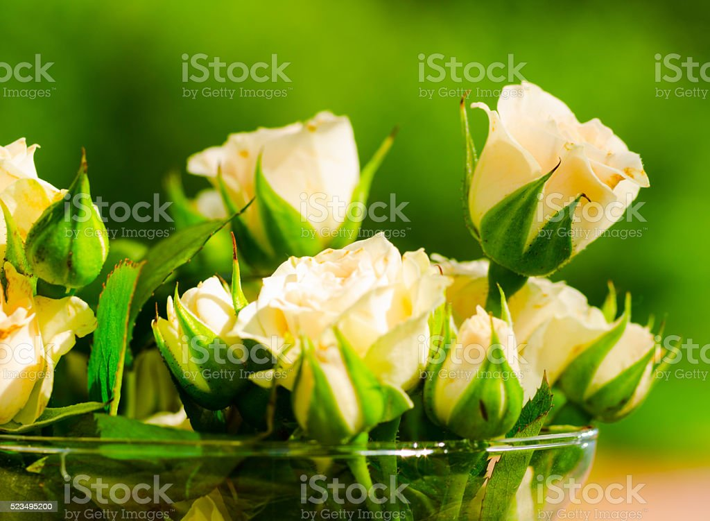 roses in jar stock photo