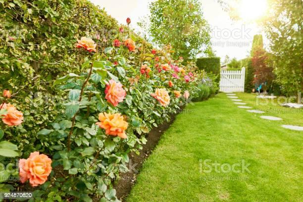 Roses in the garden picture id924870820?b=1&k=6&m=924870820&s=612x612&h=t9ah9qdsq78x88q61hw0yyhvzgeux hc9ulwsz7drse=