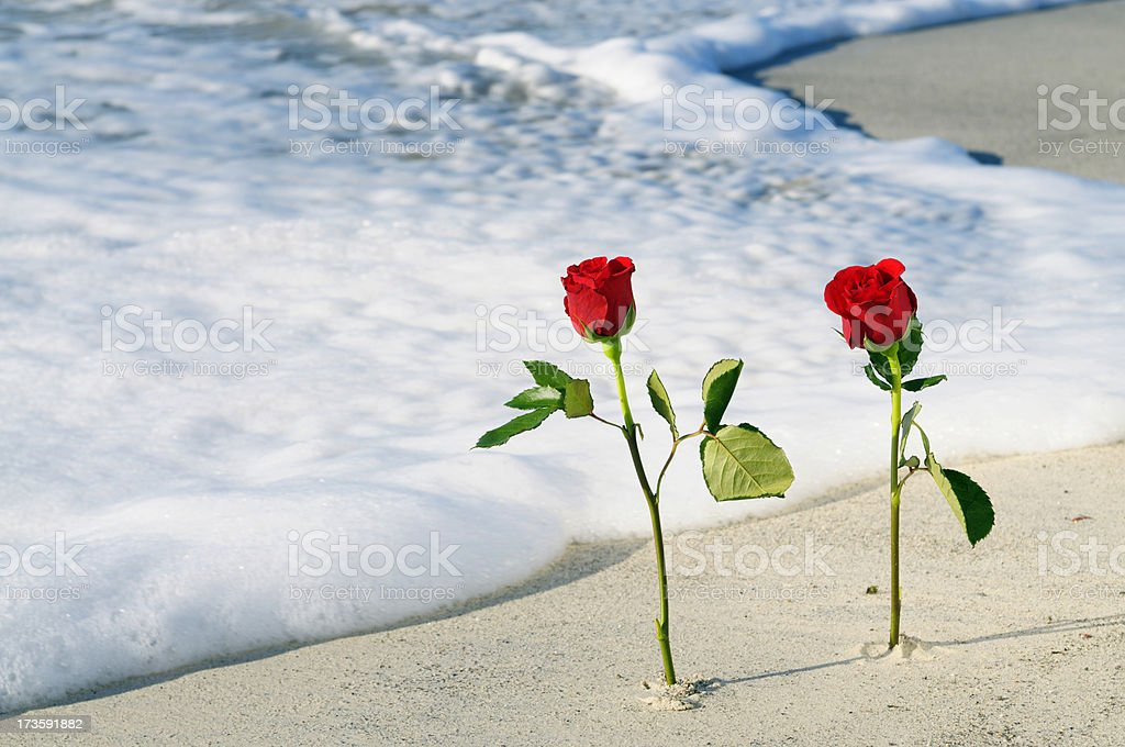Roses in the Sand on Valentine's Day.Copy Space stock photo