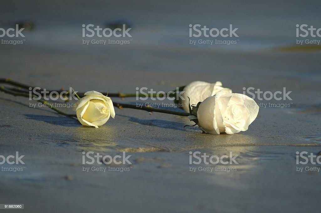Roses in the sand stock photo