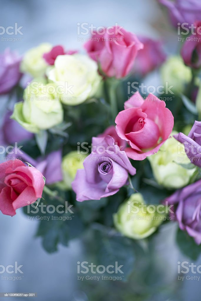 Roses in vase, close-up foto de stock libre de derechos