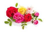 istock Roses isolated on white background 1154456638