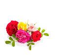 istock Roses isolated on white background 1154456639