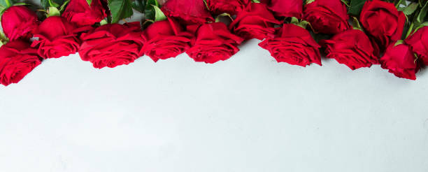 Roses on a white conctere background. stock photo