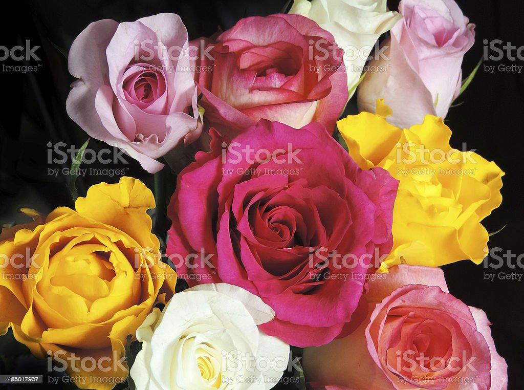 Roses on black stock photo