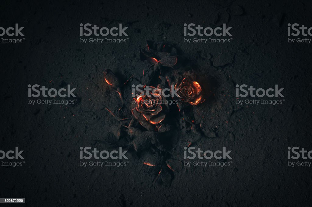 Roses on fire stock photo