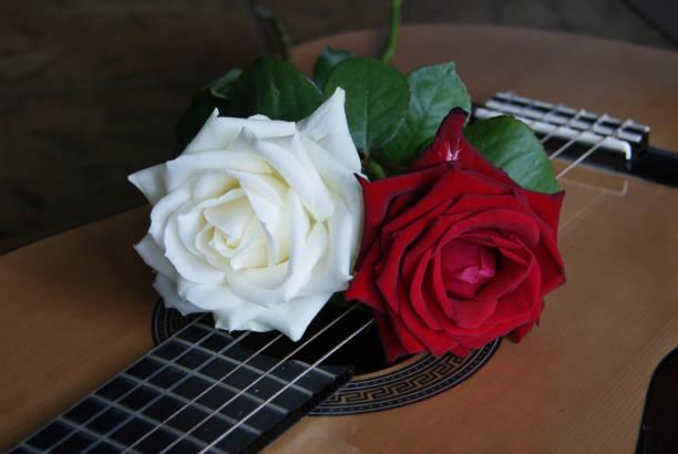 Rosor på gitarr bildbanksfoto