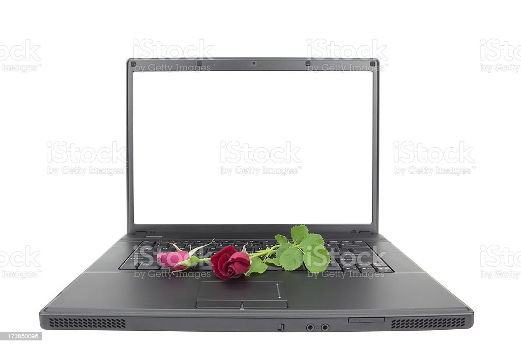 Roses on Laptop Isolated with Clipping Path XXXL stock photo