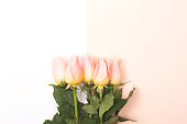 istock Roses on pink and white background 1134374832