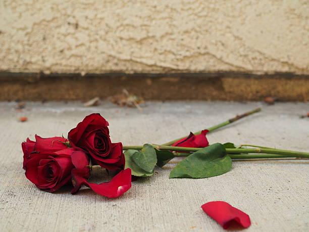 Roses on sidewalk picture id511583612?b=1&k=6&m=511583612&s=612x612&w=0&h=clgudksmcvdjxfnbxx1kab2t9mlmut z2n9nl1wiudo=