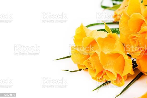 Roses picture id172128877?b=1&k=6&m=172128877&s=612x612&h=2xjt0lciozwmilokmfn9tmlmhfziqezrvaf6nbpxjke=